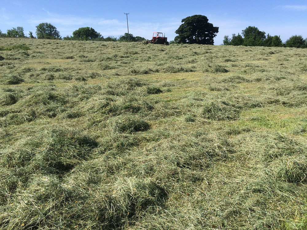 Drying hay