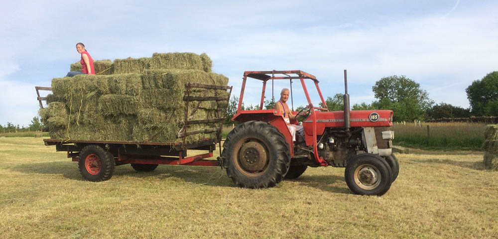 Traditional Hay